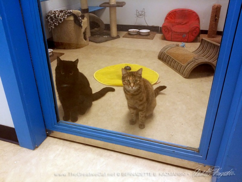 Xavier and Caramel waiting at the door.