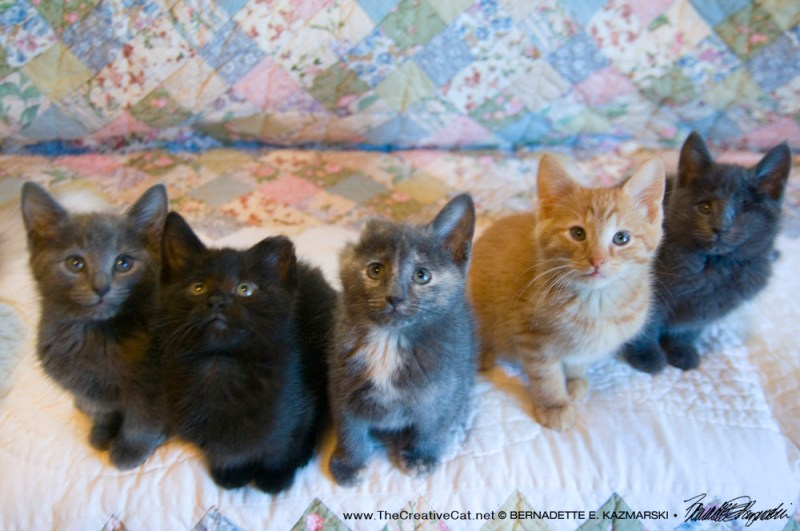 ...and the Weed Wacker kittens!