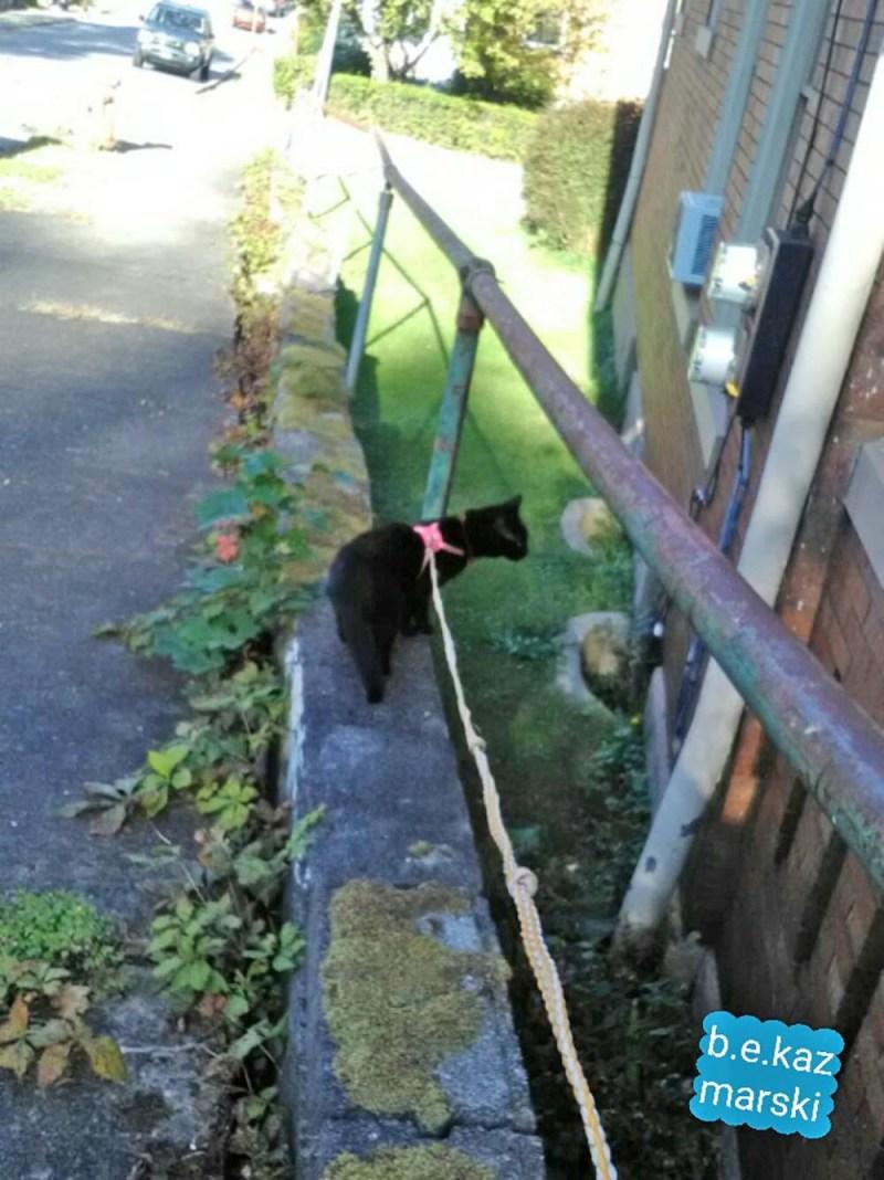 Mimi peeks into the neighbor's window.