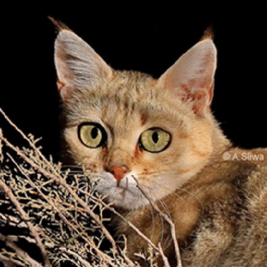 Photo by Alexander Sliwa, courtesy Alley Cat Rescue