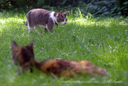 two cats in grassy yard