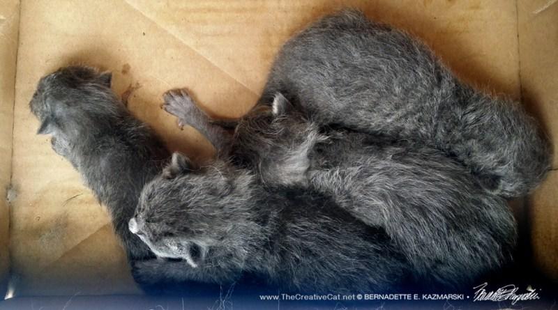 Newborn kittens.