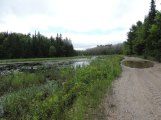 It's usually flooded on this part of the trail because of beavers!