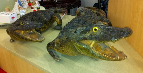 Totally my favorite things in the store!  $120 for the small and $150 for the larger, both very real, stuffed crocs!!