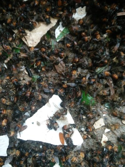 The dead bees
