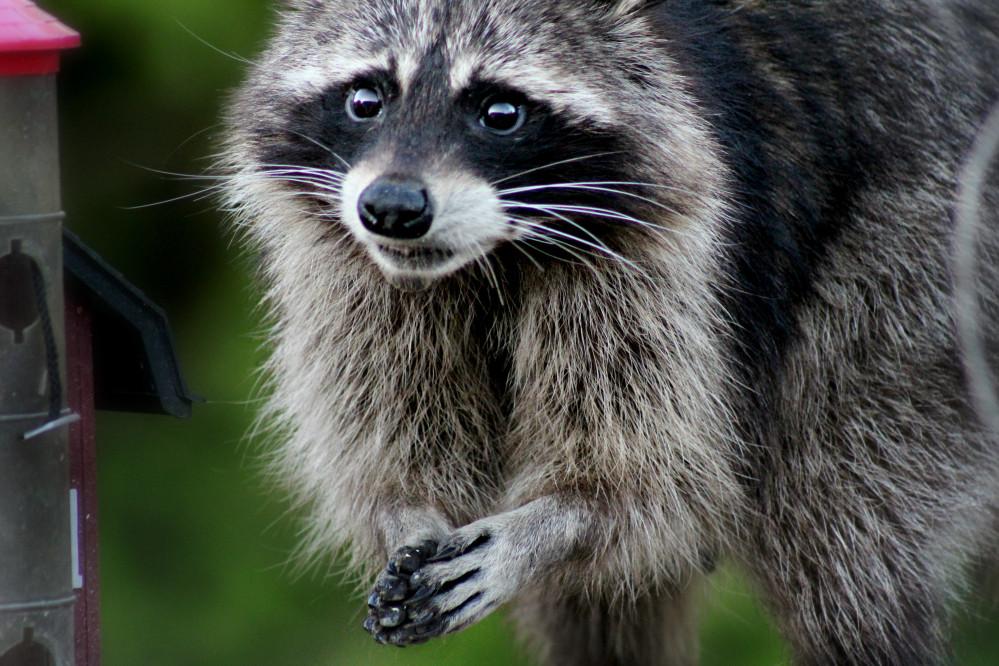 Texas Wildlife Update