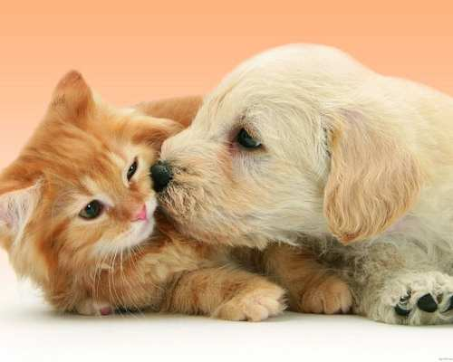 Evidence That Puppies and also Kittens Are Better With Each Other