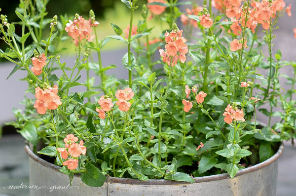 milk-funnel-flower-pot-anderson-grant Something to Talk About Link Party 28 Uncategorized