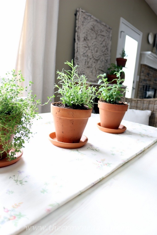 032916-7 5 Tips for Growing an Indoor Herb Garden DIY Spring