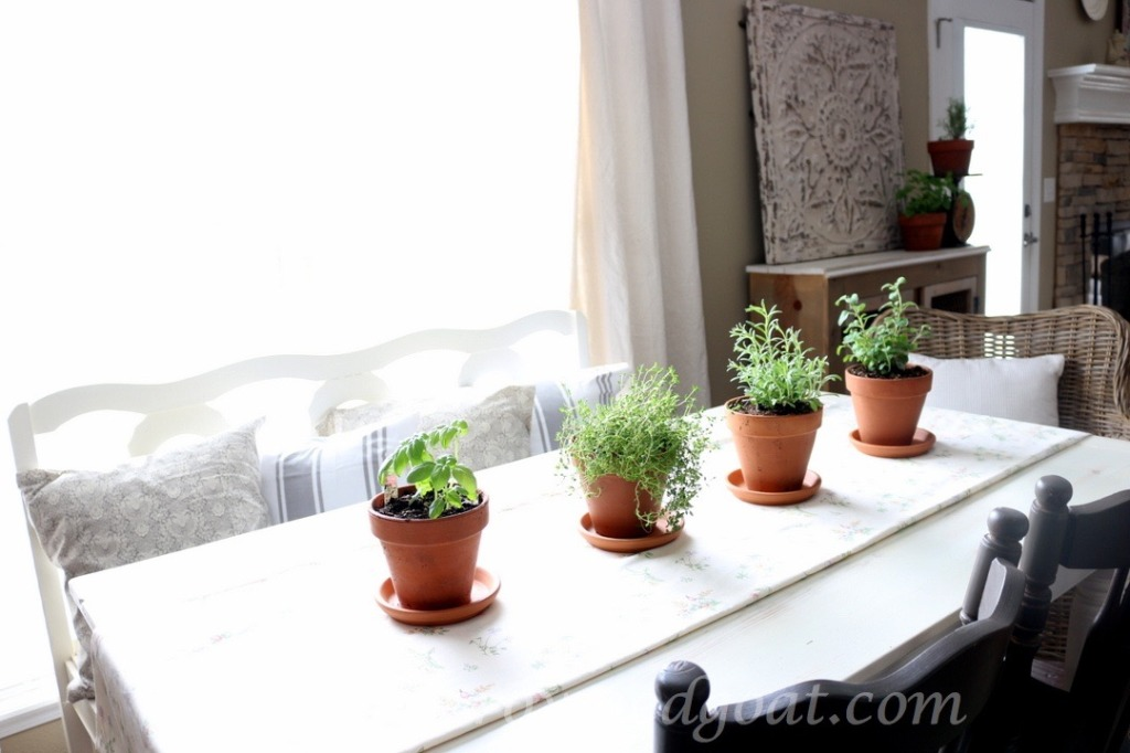 032916-8-1024x682 5 Tips for Growing an Indoor Herb Garden DIY Spring