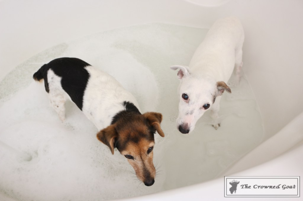 8 Tidy Home Tips for Dog Owners-10