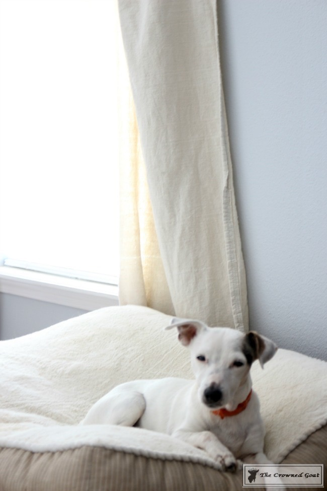 8 Tidy Home Tips for Dog Owners-5
