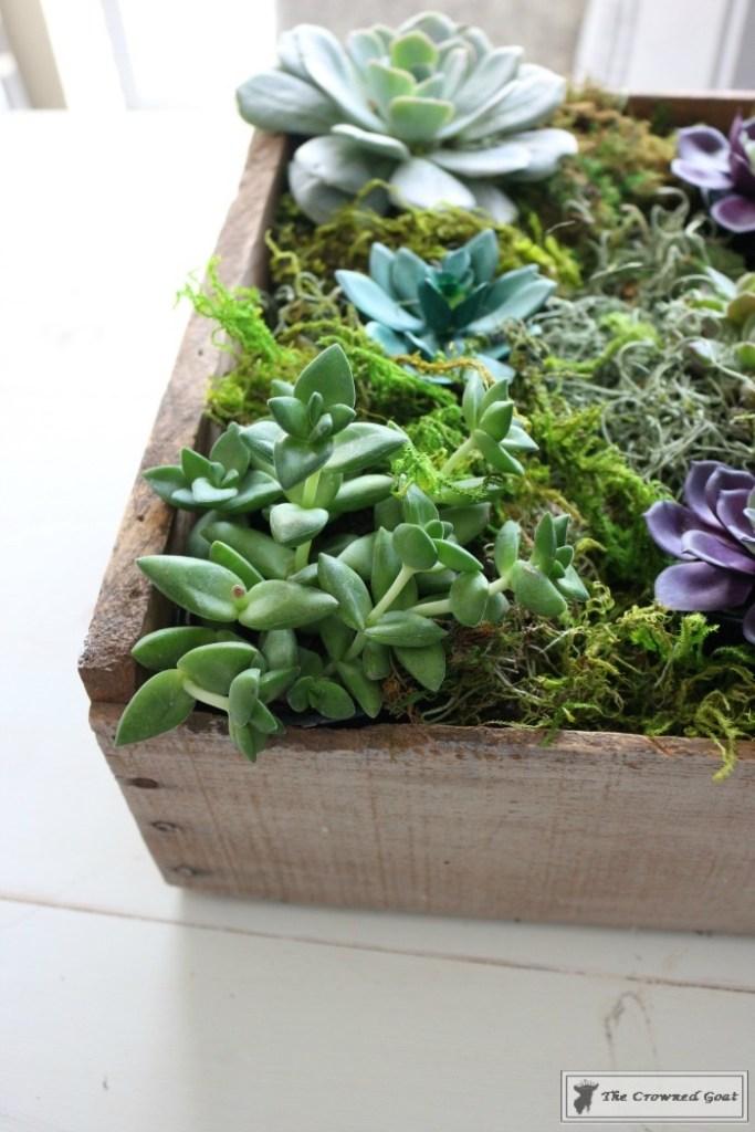 Spring Succulent Centerpiece-10