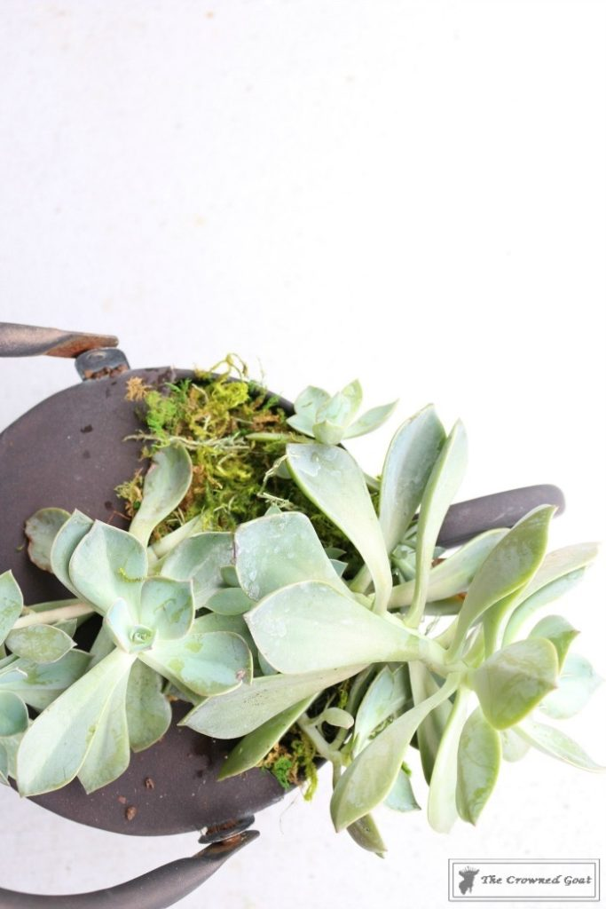 How-to-Create-a-Watering-Can-Succulent-Centerpiece-9-683x1024 Don't Trash Your Old Watering Can DIY Summer