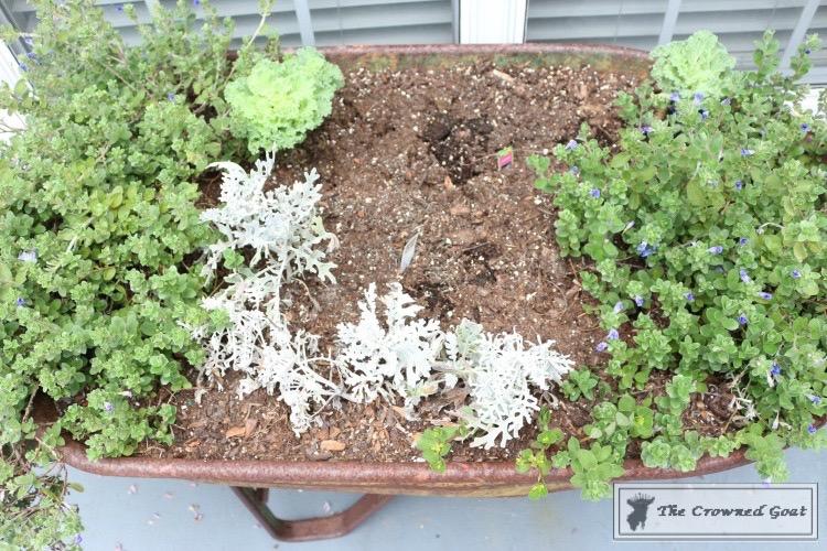 Lavender Gardener's Scrub-4