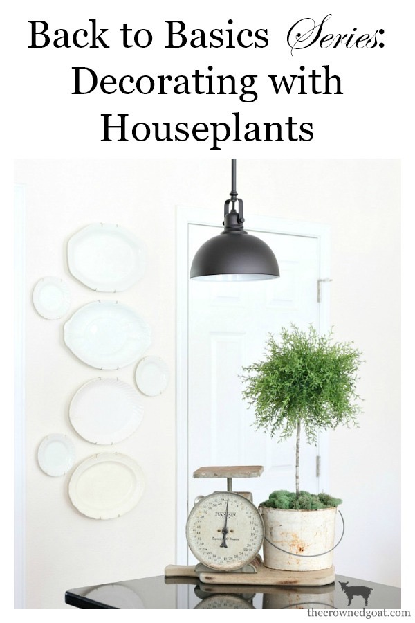 Decorating-with-House-Plants-The-Crowned-Goat-1 Decorating with Indoor Plants Back to Basic