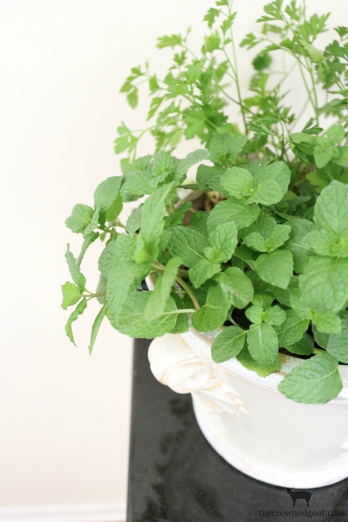 Decorating-with-House-Plants-The-Crowned-Goat-10 Decorating with Indoor Plants Back to Basic