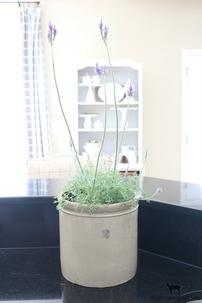 Decorating-with-House-Plants-The-Crowned-Goat-11 Decorating with Indoor Plants Back to Basic