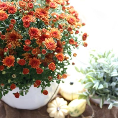 5 Easy Tips for a Festive Fall Tablescape