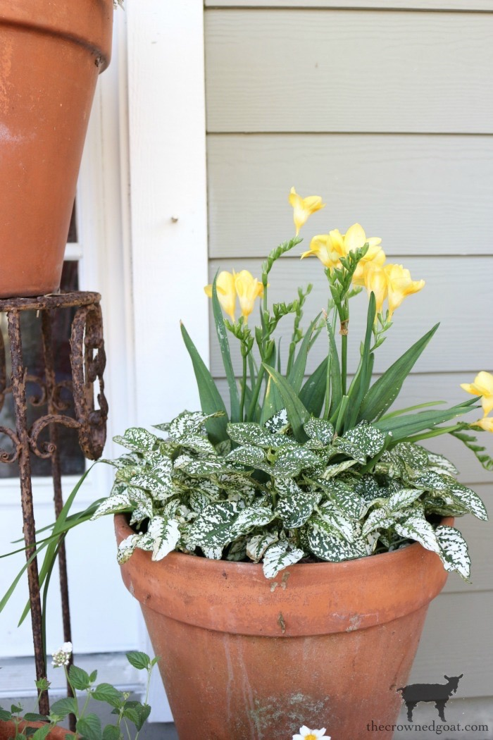 Spring-Front-Porch-Ideas-and-Blog-Hop-The-Crowned-Goat-8 Spring Front Porch Inspiration & Blog Hop Decorating DIY Holidays Spring