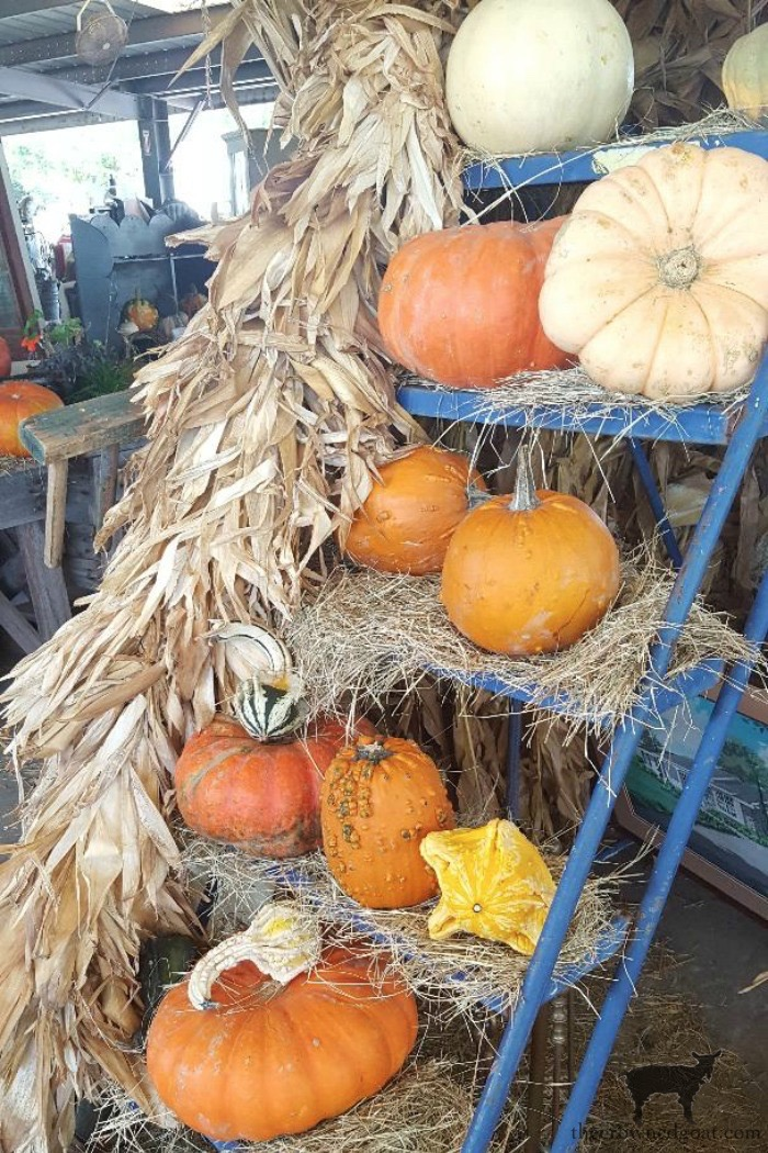 Fall-in-the-Field-Renningers-Mount-Dora-The-Crowned-Goat-6 Fall Monthly Bucket List Ideas Celebrating Life Fall Holidays