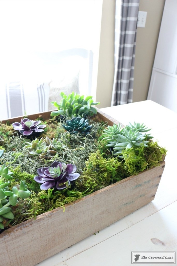 Spring Succulent Centerpiece-11
