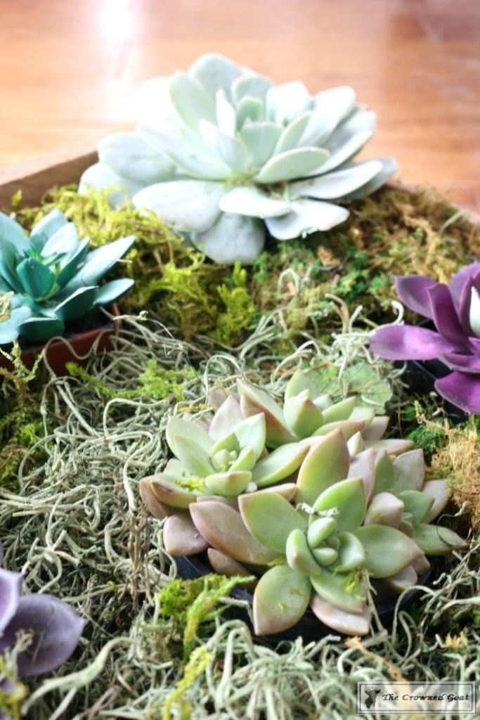 Spring Succulent Centerpiece-8