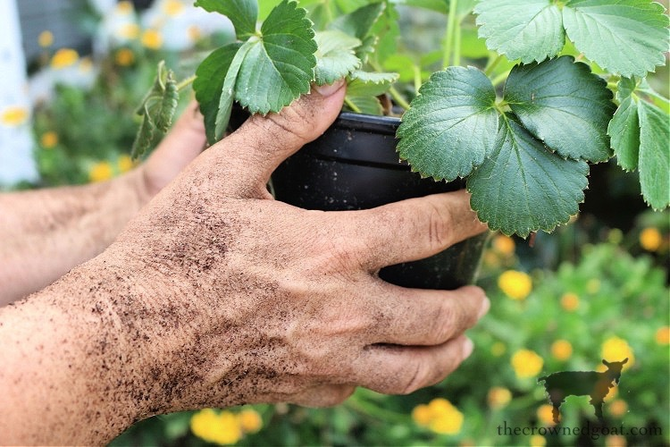 Make at Home Lavender Gardener's Hand Scrub