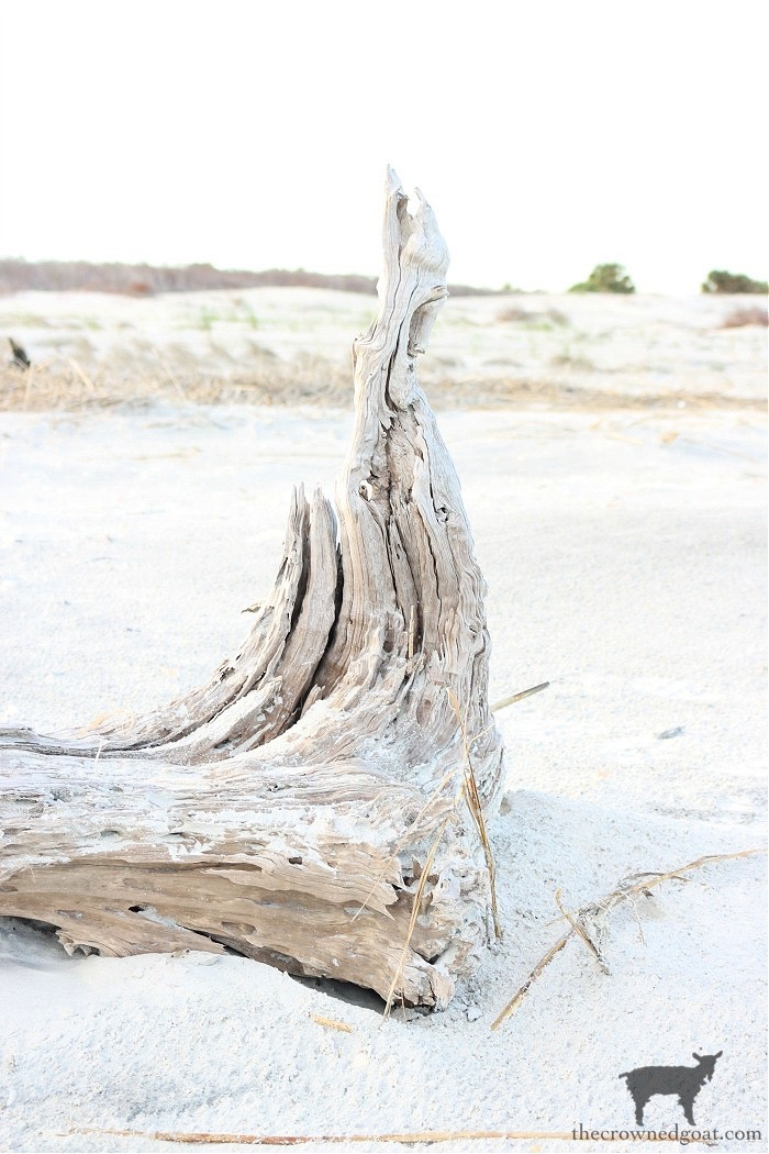 Summer Bucket List - Slowing Down and Searching for Driftwood on the Beach This Summer -  The Crowned Goat