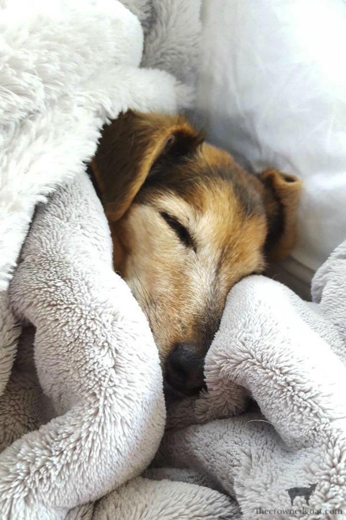 Little Dog Sleeping