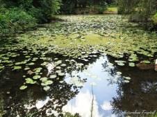 plantas-acuaticas-Jardin-Botanico-Nacional-de-Cuba