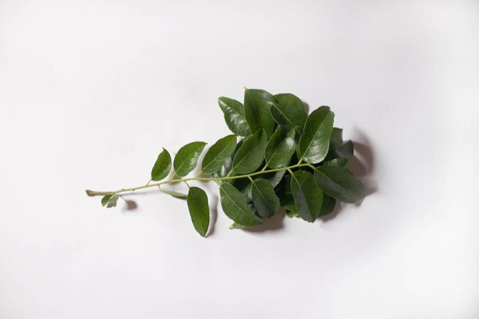 brand of curry leaves
