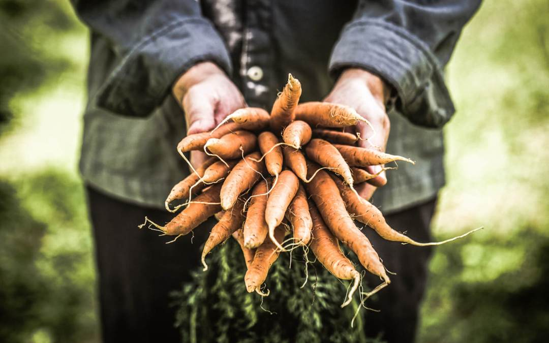 The Curious Case of the World Carrot Museum