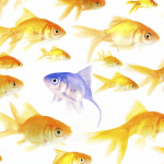 fish-blue