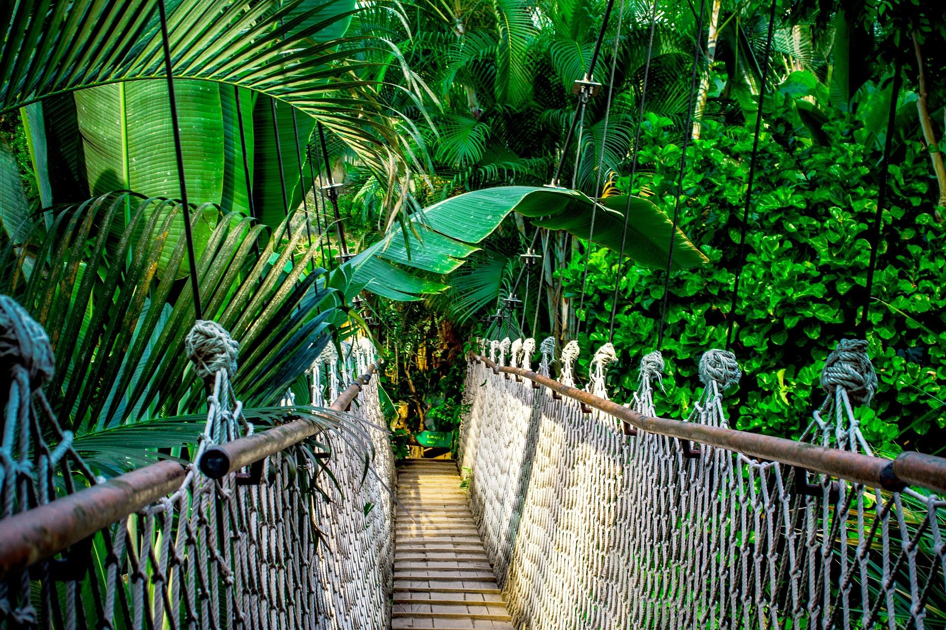 Amazon jungle |© nile/Pixabay