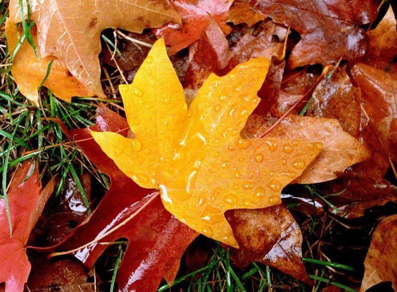 https://i2.wp.com/thecultureur.com/wp-content/uploads/2012/10/central-park-autumn-07004-800x590.jpeg