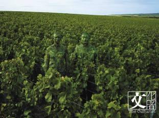 劉勃麟與Ruinart的員工一同隱身在作品當中,強調在釀酒過程中與大自然的關係。