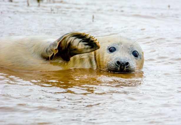 Whilst-shooting-the-seal-playing-it-decided-to-give-a-wave
