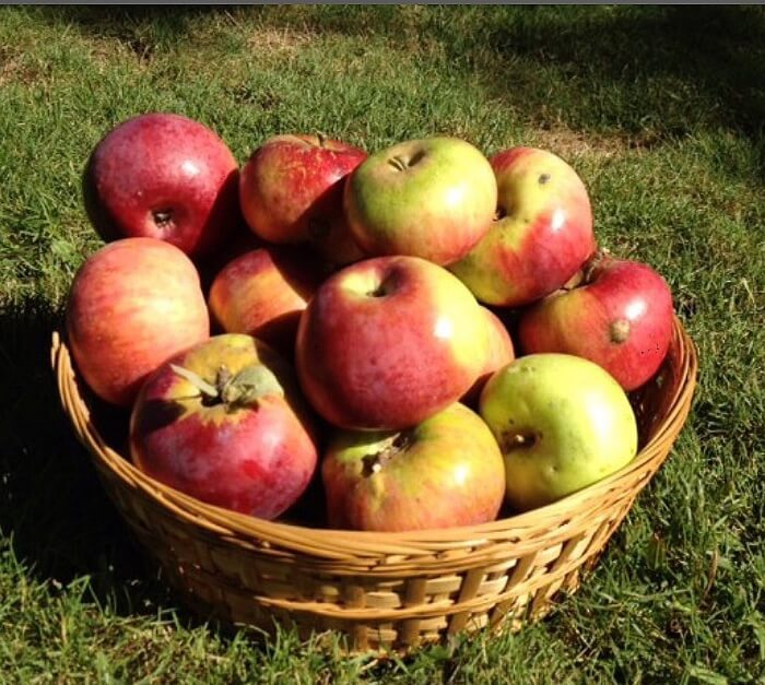 Apple Vending Machine Apples in Basket