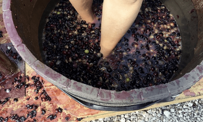 Feet on a barrel of red grapes