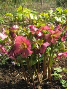 a-curious-gardener-great-dixter-IMG_0141