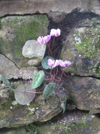 a-curious-gardener-great-dixter-IMG_0149