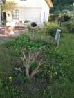 the-curious-gardener-denmark-garden-Maintenance