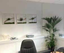 bespoke-terrariums-london-greenwall-plant-office-made-to-order-curious-gardener-4-OST
