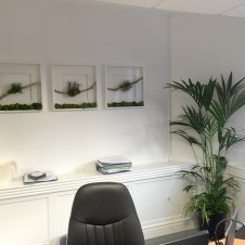 Office Plants in London
