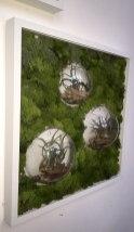 bubble-wall-framesclose-living-decoration-terrerium-plants-moss-living-wall-office-houseplants-curious-gardener1