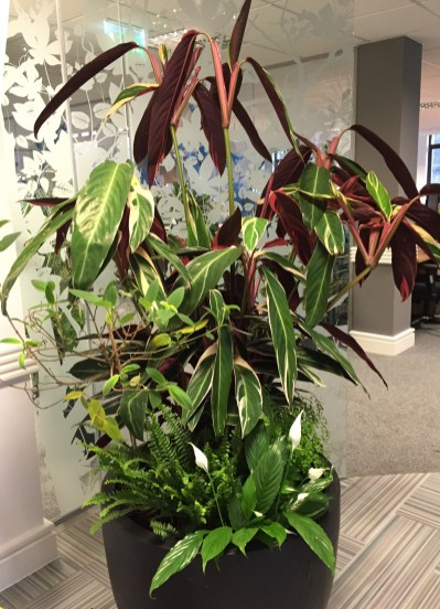 reduce-pollution-indoor-plant-office-houseplants-bespoke-design-curious-gardener
