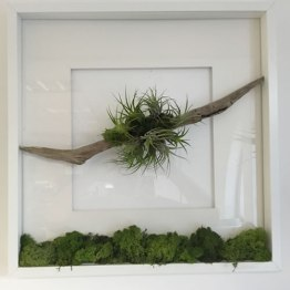 terrariums-london-greenwall-plant-office-houseplants-curious-gardener-close-10