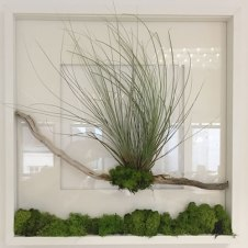terrariums-london-greenwall-plant-office-houseplants-curious-gardener-close-11