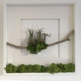 Living Frames – Airplants